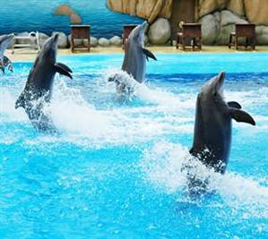 A dolphin show at Marineland